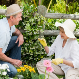 Couple Doing Gardening Work